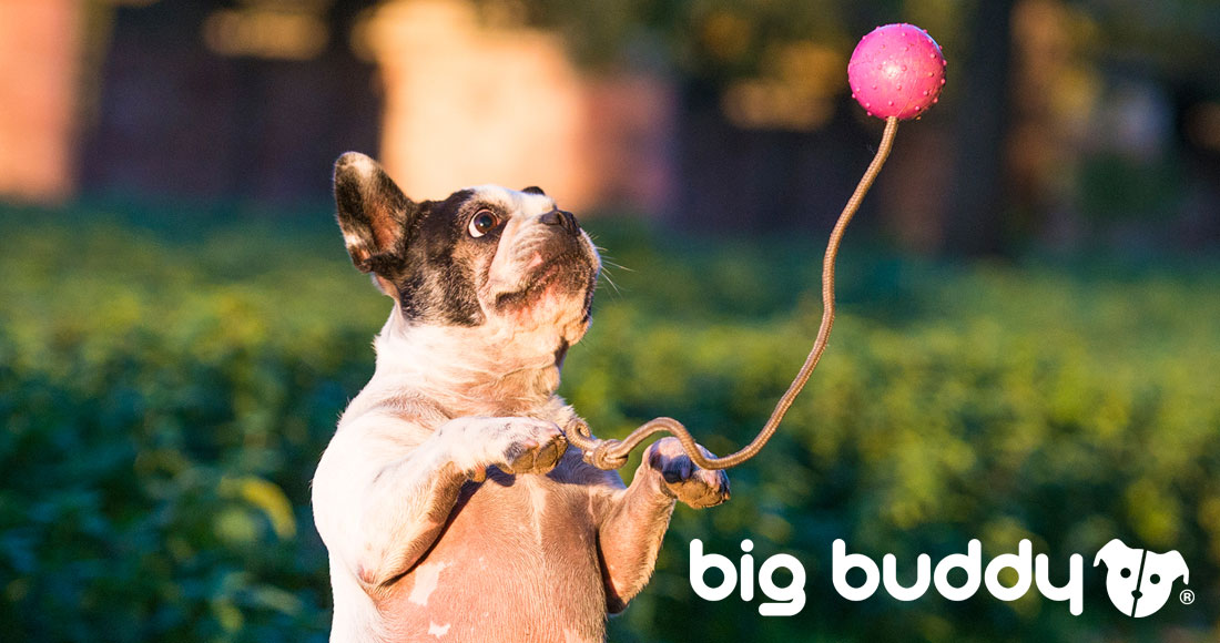 big buddy news - launch